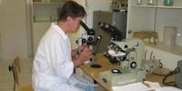 Изучение мехнанизмов иммунологической толерантности при трансплантации донорских органов